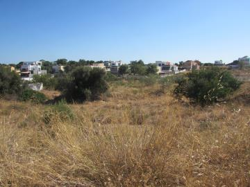 Lote, Western - Silves _ Litoral, Silves
